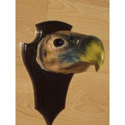 tête de vautour oricou