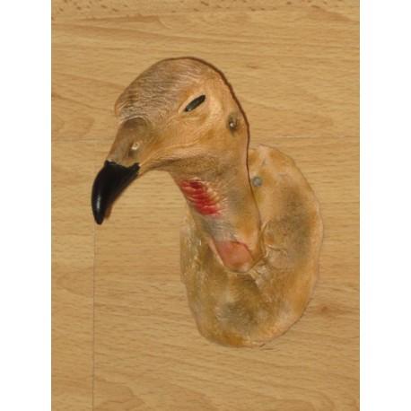 tête de vautour charognard