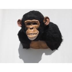 Chimpanzé Africain