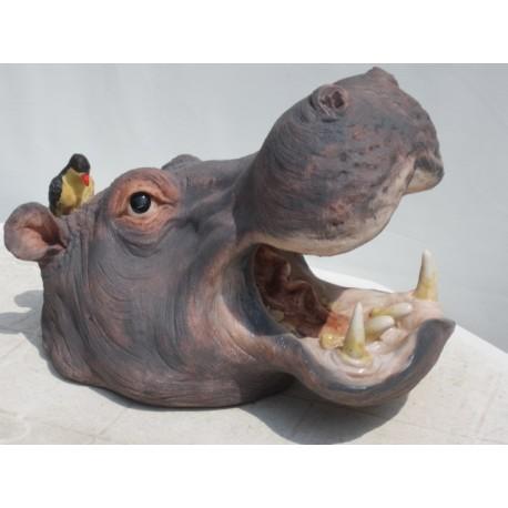 Trophée tête d'hippopotame