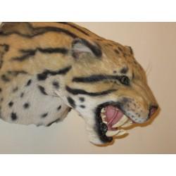 Panthère nébuleuse ou longibande