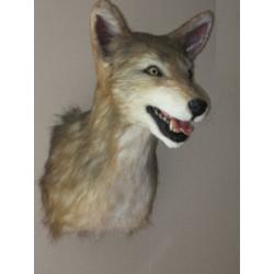 Réplique coyote