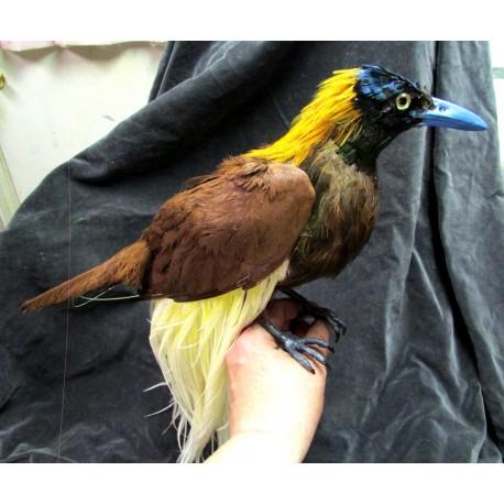 Réplique oiseau de paradis