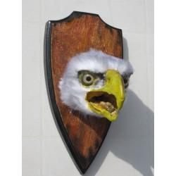 tête de pygargue Américain