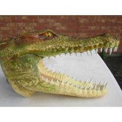 Trophée tête de crocodile