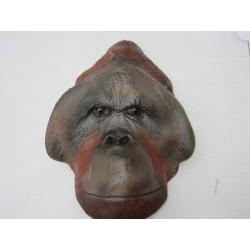 Orang-outan mâle