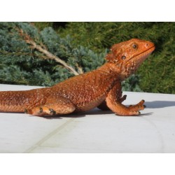 Lézard  dragon barbu  PVC