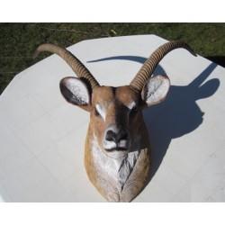 réplique trophée gazelle Africaine.