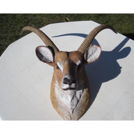réplique trophée gazelle en résine