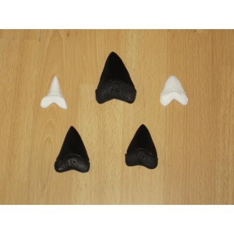 Lot répliques dents de Requins