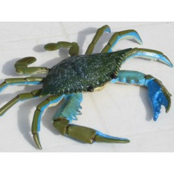 crabe taille réelle