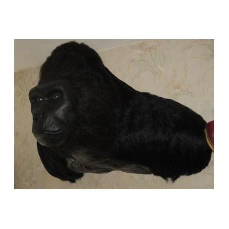 Réplique buste mural de gorille Africain