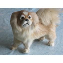 chien shitzu  taille réelle