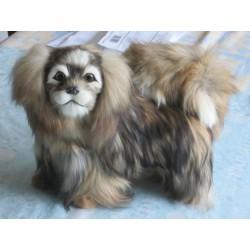 chien pékinois  taille réelle