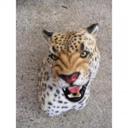 Léopard panthère