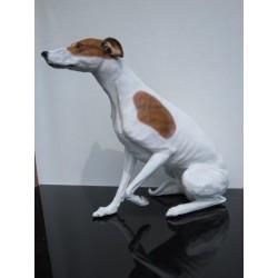 chien lévrier greyhound
