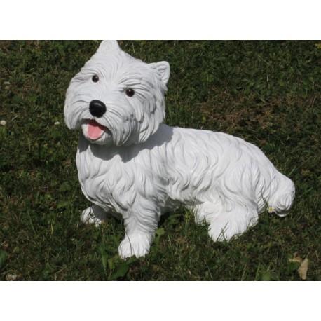 chien white terrier ( Whestie)